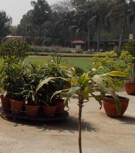 The place of Gandhi's death is marked by a small shrine in the garden (small structure in distant center of this picture).